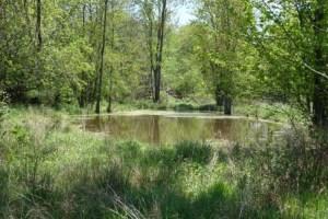Pond Windshadow